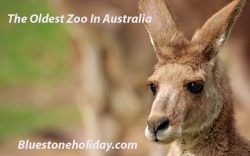oldest zoo in australia, south bank parklands,
